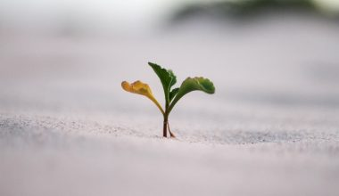 plant-sand-unpredictable-impossible-resilience